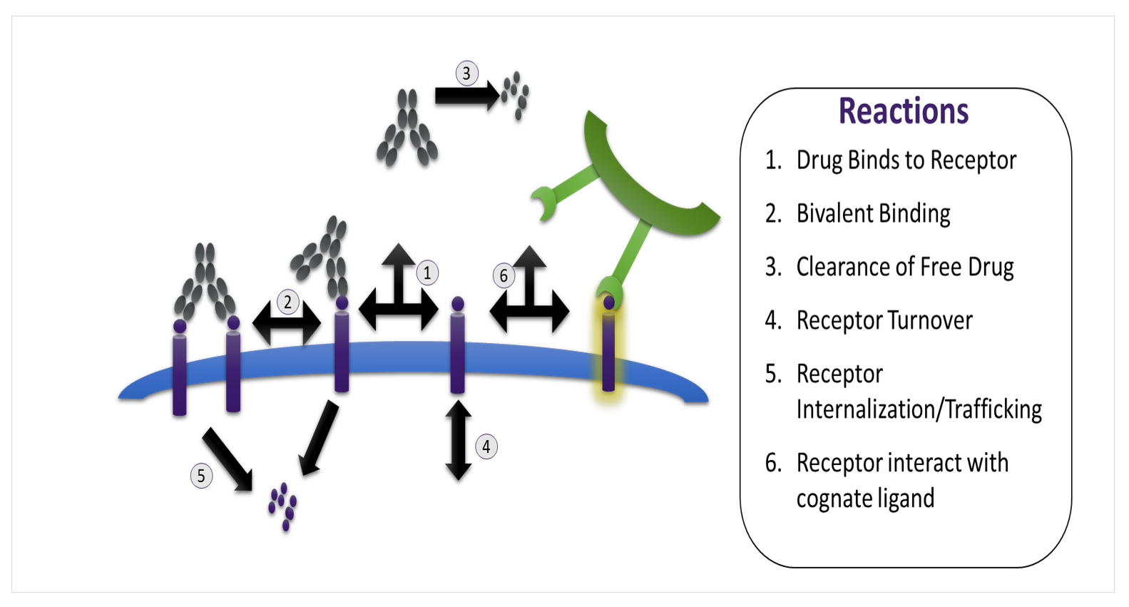 Tim3/PD1 Pharmacology Schematic